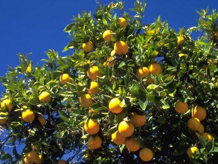 portocalul
