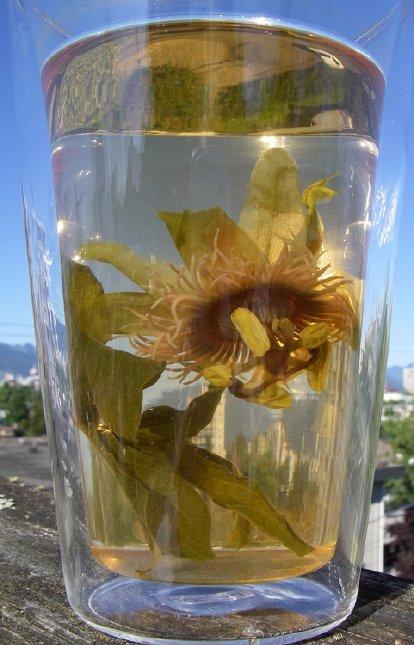 ceai de passiflora