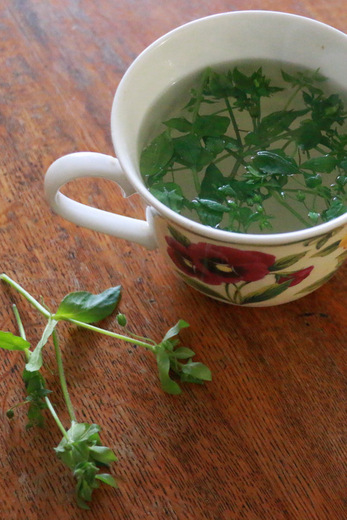 ceai de scanteiuta
