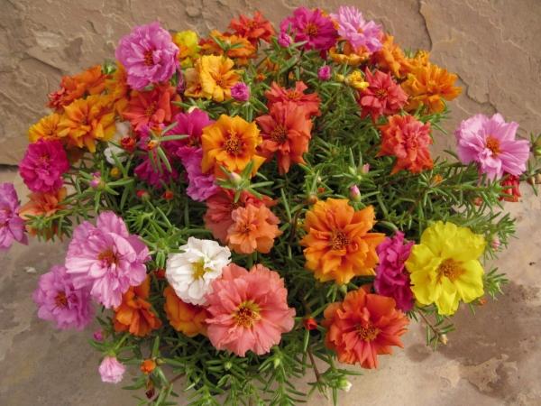 flori de piatră