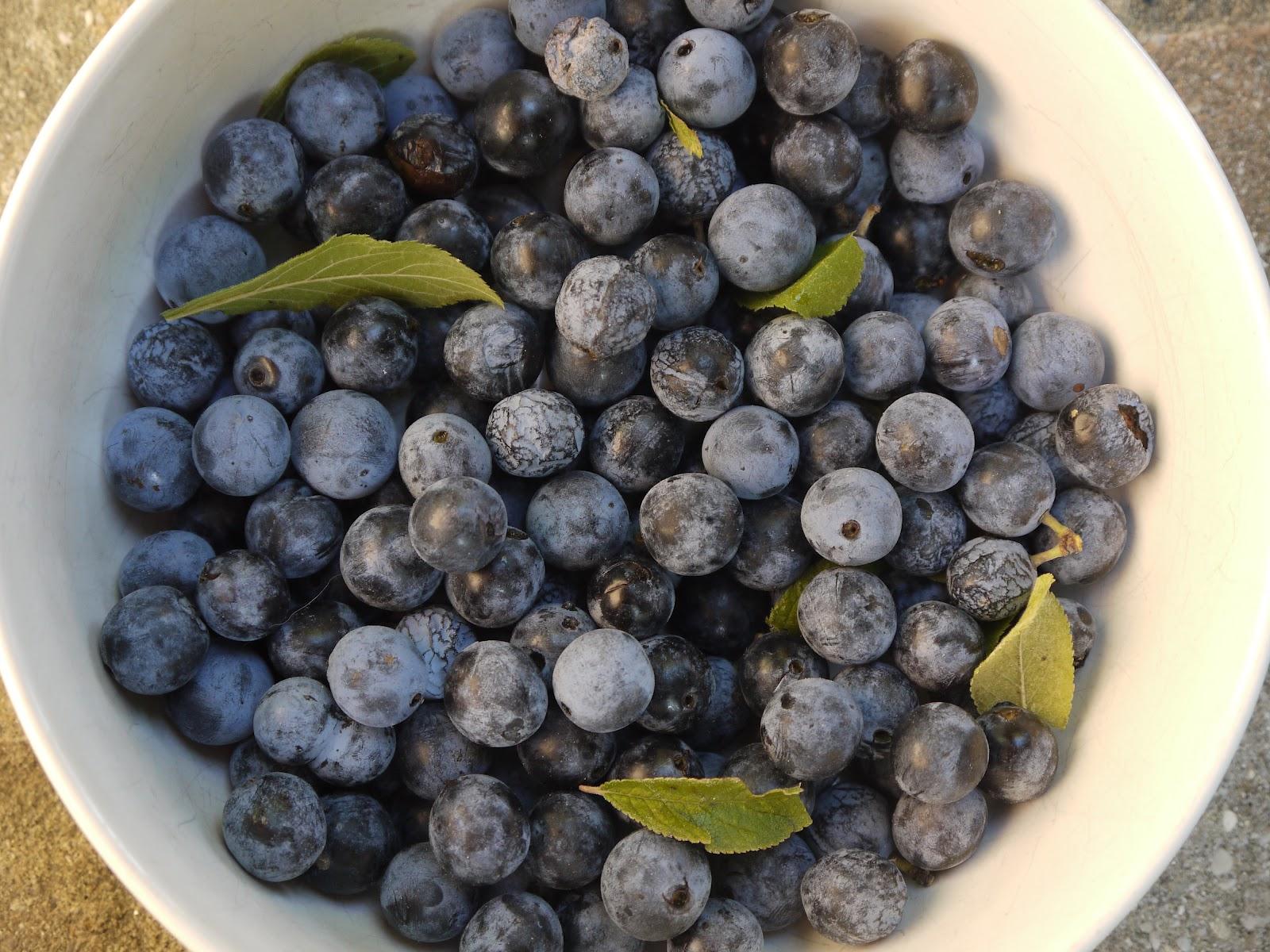 fructe de pormumbar