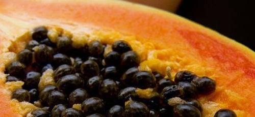 papaya semințe