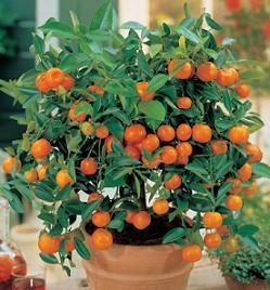 portocal