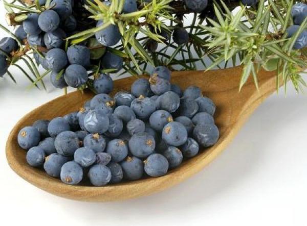 fructe de ienupăr