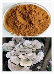 extract ciuperca coriolus
