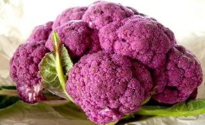 conopidă violet